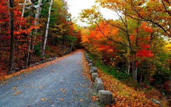 autumn,mountain,walk,colors,Road,trees,fall,leaves,colorful,path
