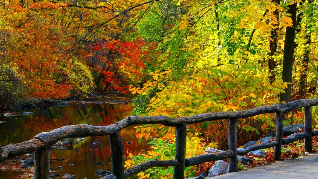 water,colorful,trees,autumn,walk,park,forest,colors,river,leaves,fall