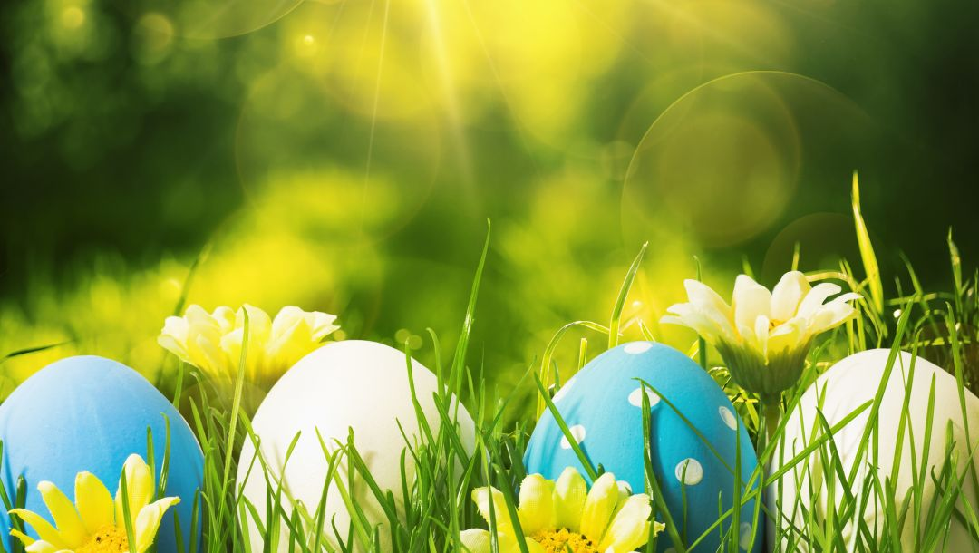 spring,Easter,цветы,happy,decoration,яйца,Весна,eggs