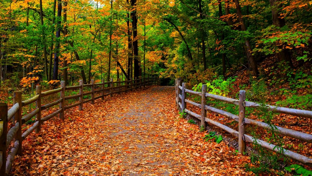 walk,park,forest,colors,path,Road,autumn,colorful,fall,leaves,trees