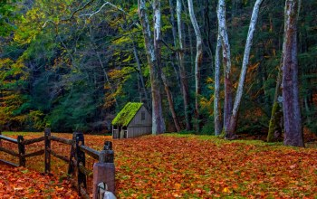 colorful,leaves,walk,colors,autumn,park,Road,house,forest,fall,trees,path,grass
