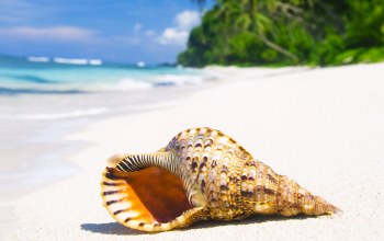 emerald,summer,Seashell,sand,paradise,blue,beach,ocean,palm,tropical,vacation,coast