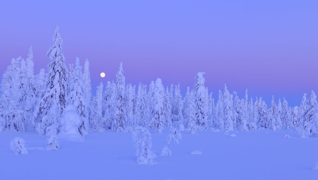 northern ostrobothnia,trees,oulu province,forest,finland,snow,winter