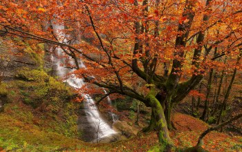 basque country,bizkaia,spain,gorbea natural park,Uguna waterfall