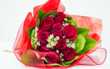 lovely,rose,Bouquet,red roses,beautiful,flower,nice,roses,pretty,cool,beauty