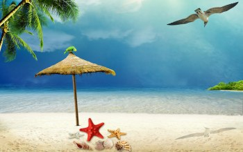 Seashells,лето,starfish,tropical,summer,beach,vacation