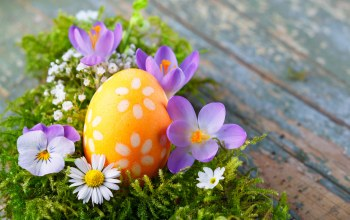 happy,яйца,eggs,Easter,цветы,spring,decoration,Весна
