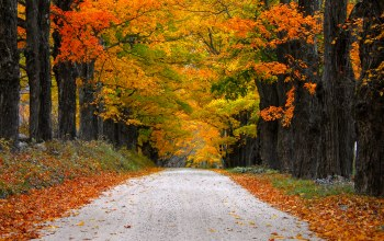 autumn,leaves,trees,fall,path,walk,mountain,colorful,colors,Road