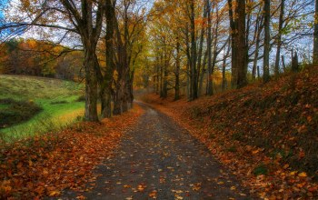 leaves,autumn,forest,park,colors,fall,Road,trees,colorful,walk,path