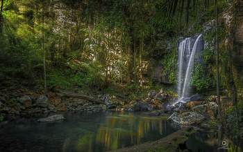 tamborine national park,Australia,queensland,Curtis falls