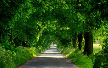 park,trees,spring,Road,walk,forest,path