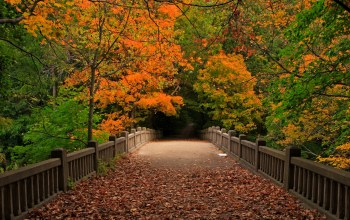 view,trees,bridge,leaves,autumn,park,walk,forest,fall
