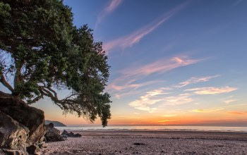 Sunset,tree,ocean,beach,coast,sky