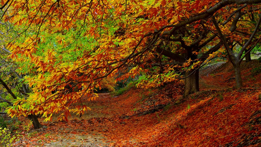 fall,colorful,autumn,path,walk,park,Road,forest,colors,leaves,trees