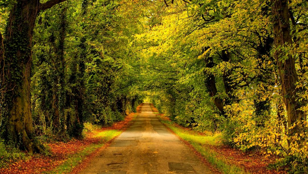 autumn,Road,fall,leaves,path,colors,park,colorful,forest,walk,trees