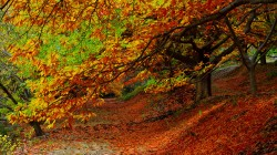 fall,листья,colorful,autumn,path,walk,nature,park,Road,forest,colors,leaves,trees