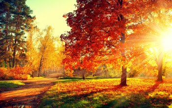 path,Road,colorful,forest,colors,autumn,leaves,park,trees,walk,fall