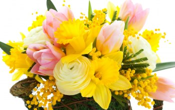 tulips,цветы,petals,mimosa,narcissus,yellow,Bouquet,bright