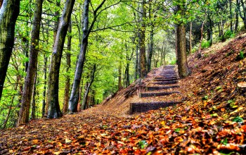 park,steps,autumn,trees,walk,leaves,forest