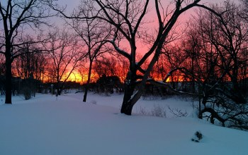 houses,winter,snow,orange sky,Sunset,branches,trees