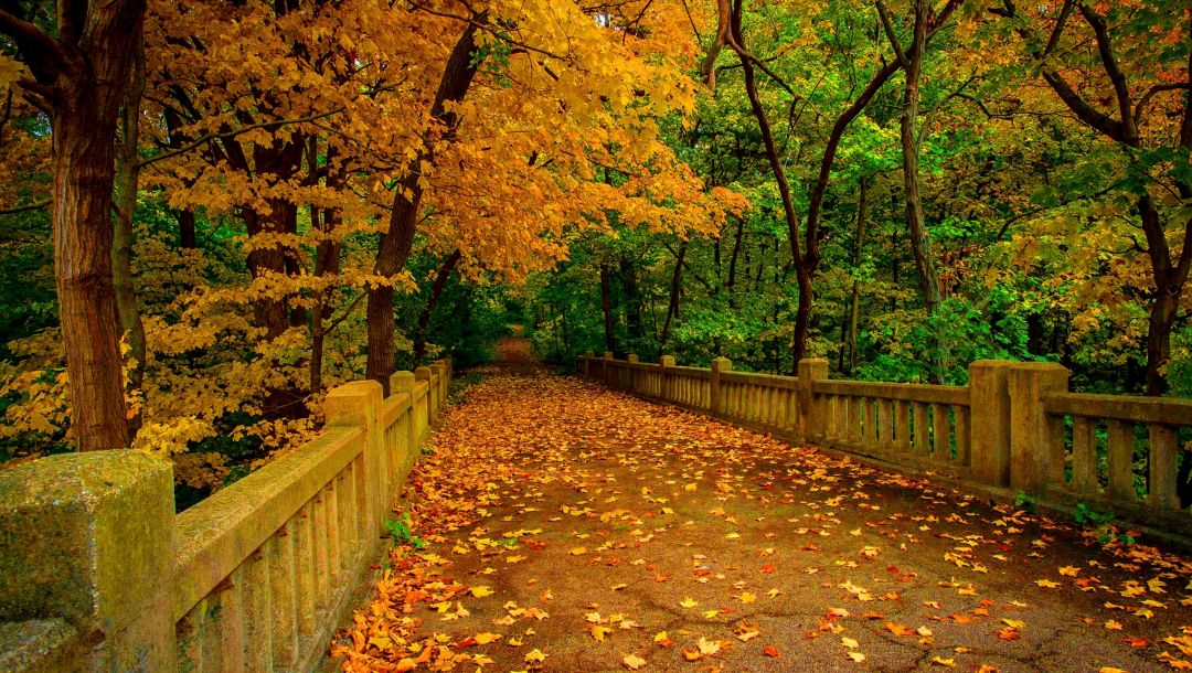 river,trees,colorful,leaves,walk,fall,forest,autumn,colors,park