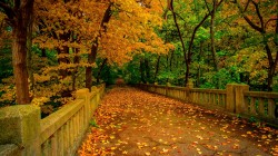 river,trees,colorful,leaves,листья,walk,fall,forest,autumn,nature,colors,park