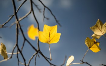 autumn,Yellow leaf,garden,tree