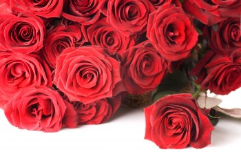 цветы,roses,Red,Valentine`s day