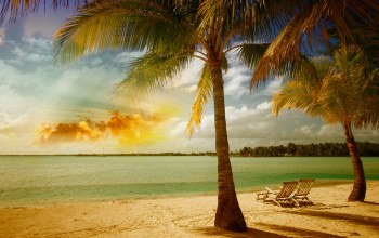 beach,tropical,summer,palm