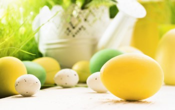 eggs,Easter,decoration,цветы,яйца,happy,spring,Весна