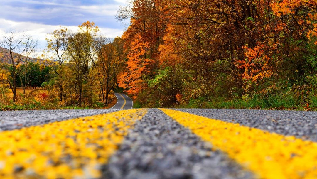 trees,Road,walk,autumn,path,colors,colorful,leaves,fall,park,forest