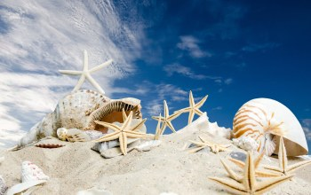 starfishes,sand,ракушки,Seashells,summer,sky,sunshine,beach