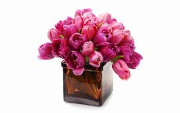 tulips,Bouquet,Purple,цветы
