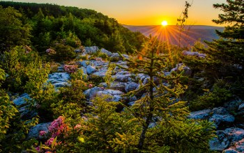 Dolly sods wilderness,west virginia,allegheny mountains,monongahela national forest