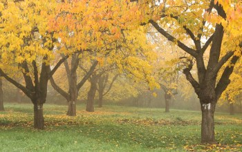 trees,leaves,fall,fog,park,november,ноябрь,autumn,осень