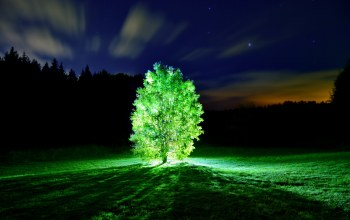 ночь,свет,glowing tree