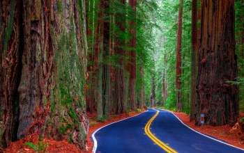United states,california,Redwood state park