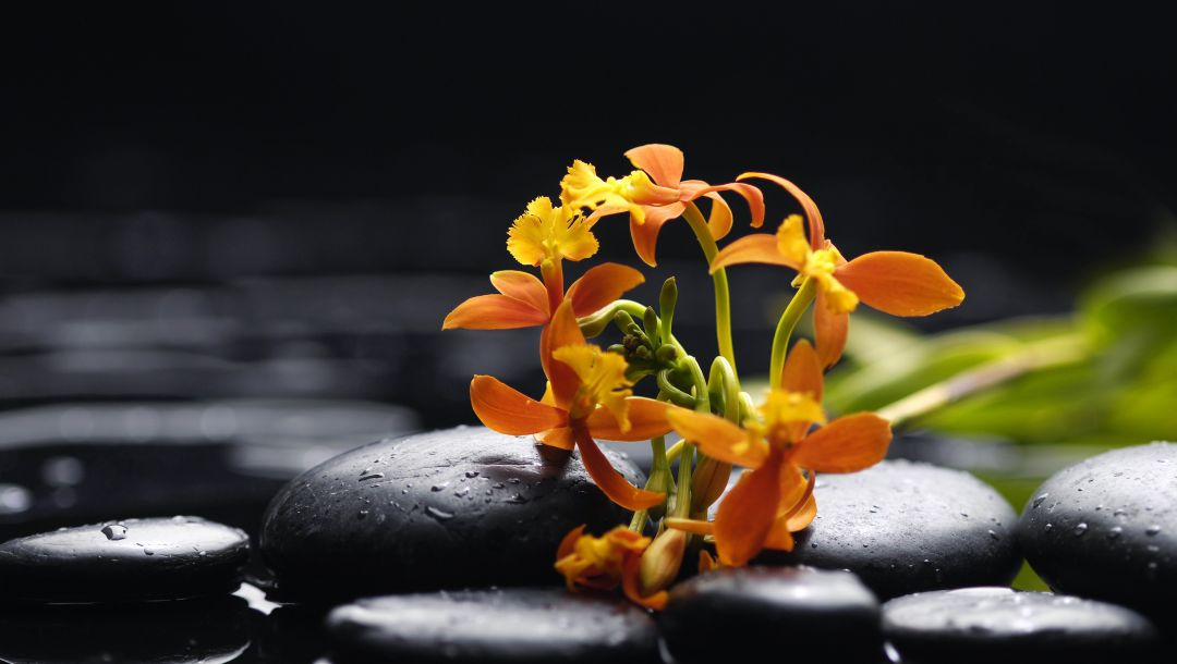 tenderness,Orchid,beauty,drops,water,petals,цветы,orange,black stones