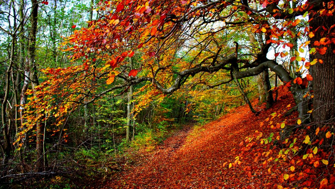 Road,forest,park,autumn,trees,walk,leaves,path,fall,colorful,colors
