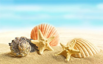 Marine,sand,starfishes,beach,Seashells,ракушки