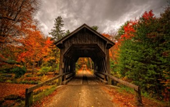 bridge,forest,trees,view,autumn,walk,park,leaves,fall