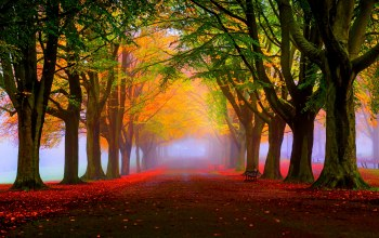 trees,park,Road,bench,colors,autumn,walk,grass,leaves