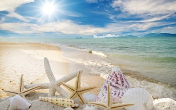 Seashells,summer,sunshine,ракушки,beach,sky,sand,starfishes