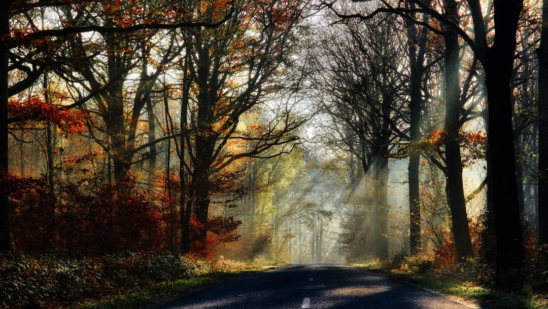forest,walk,autumn,fall,colorful,leaves,colors,park,Road,path,trees