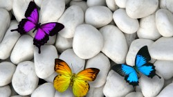 butterflies,white stones,colorful,Design by marika