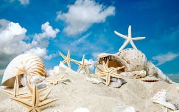 ракушки,summer,sand,starfishes,sunshine,beach,Seashells,sky