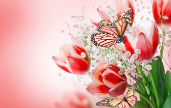 flowers and butterflies,butterflies,tulips,tulips pink,Bouquet