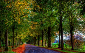 walk,leaves,colors,path,colorful,Road,fall,trees,autumn,forest
