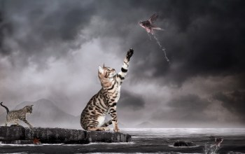 water,photomanipulation,surrealism,Cats,fishes