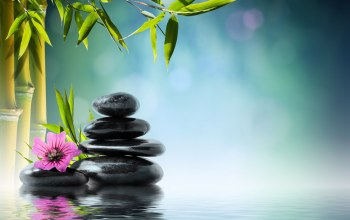 reflection,zen,water,flower,Spa,stones,бамбук,Bamboo,Вода,Orchid